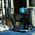 如果這世界貓消失了 影評 25.jpg