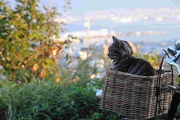 如果這世界貓消失了 影評 19.jpg