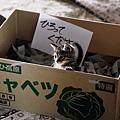 如果這世界貓消失了 影評 6.jpg