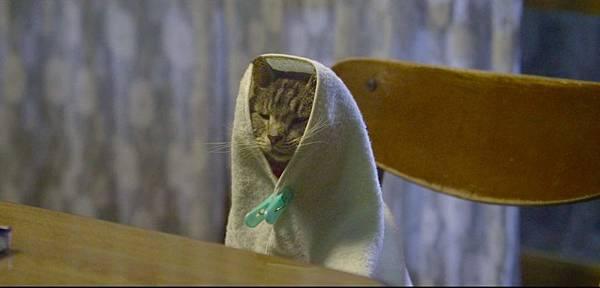 如果這世界貓消失了 影評 4.jpg
