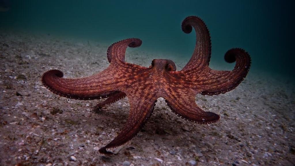 我的章魚老師 My Octopus Teacher (Netflix紀錄片) 3.jpg