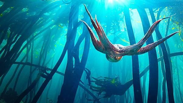 我的章魚老師 My Octopus Teacher (Netflix紀錄片) 6.jpg