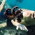 我的章魚老師 My Octopus Teacher (Netflix紀錄片) 5.jpg