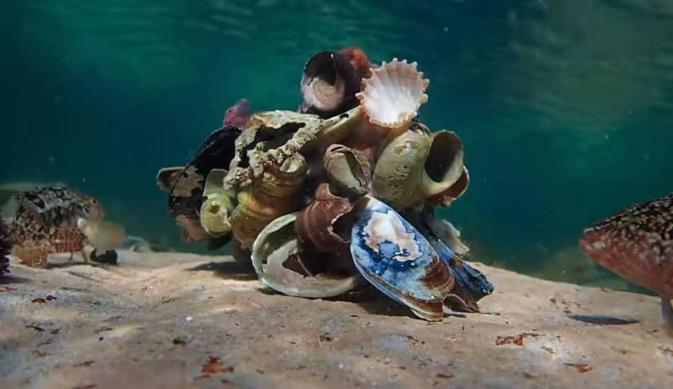 我的章魚老師 My Octopus Teacher (Netflix紀錄片).jpg