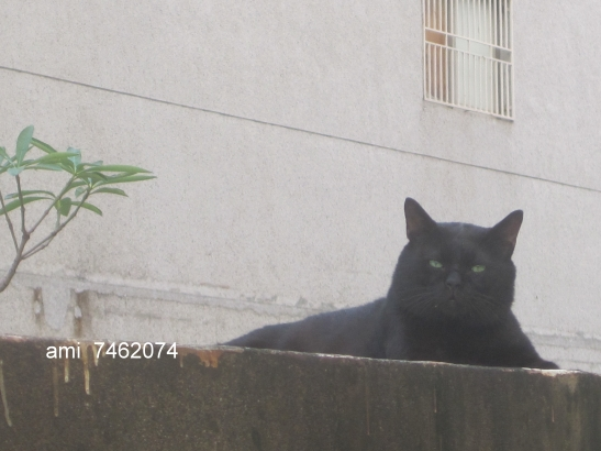 IMG_9908貓貓.jpg