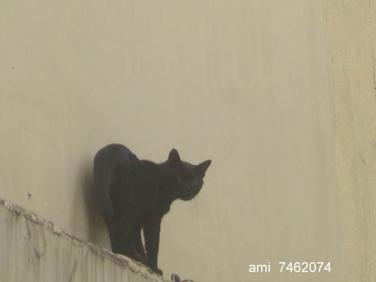 IMG_9910貓貓2.jpg
