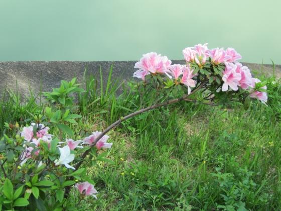 IMG_2578澄清湖7
