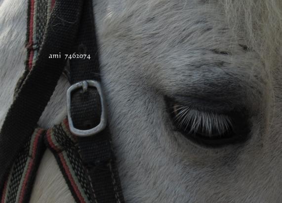 未命名 - 4馬的眼睛