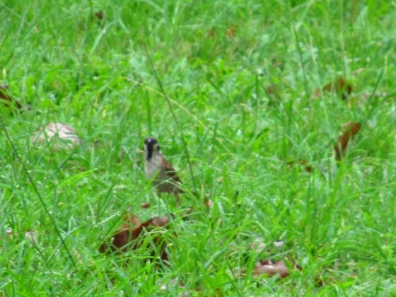 IMG_4210小鳥