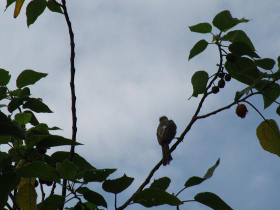 IMG_5536鳥1