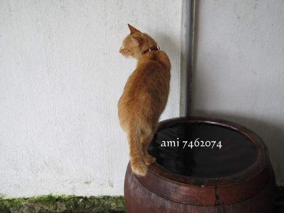 IMG_9122貓村1