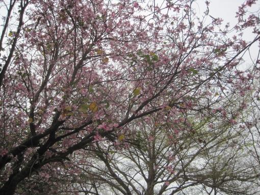IMG_8321花兒6.jpg
