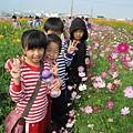 IMG_0246花海.jpg