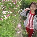 IMG_0258花海.jpg
