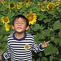 IMG_0280花海.jpg