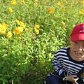 IMG_6623花海.jpg