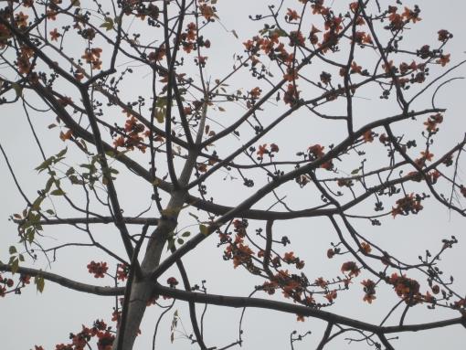 IMG_8311花兒1.jpg