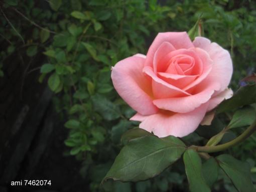 IMG_7487海上花.jpg