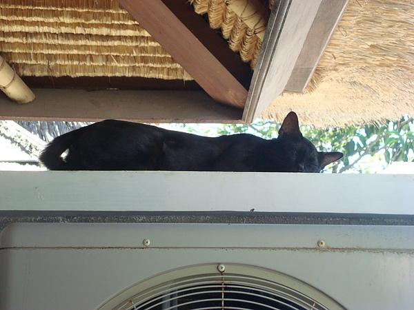 巧遇黑貓=w=