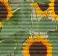 sflower1