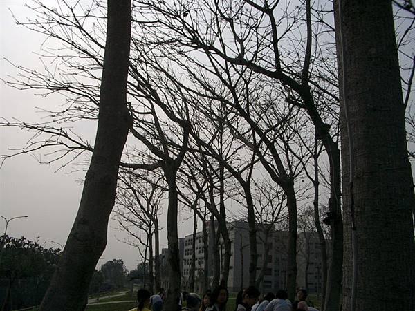 照片 161