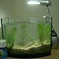 小魚缸(還沒有魚的時候...)