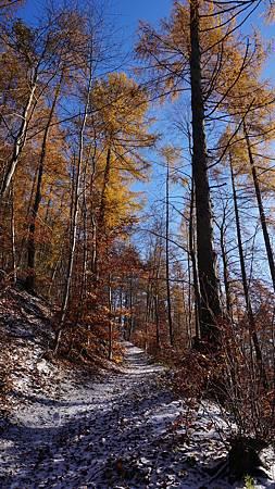 [11/27] 滿是雪的森林小徑
