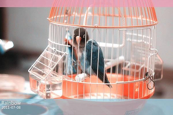 買個臨時的鳥籠,似乎太小了~