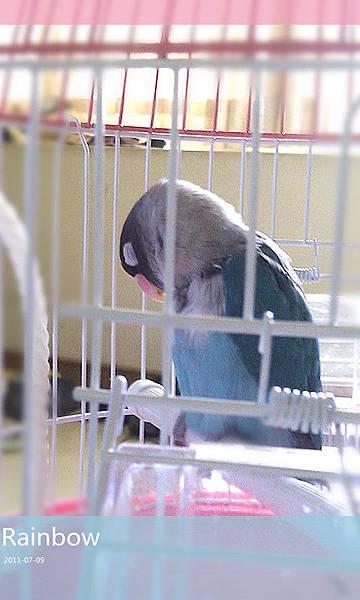 假日的午後,我在沙發,牠在籠子.....我們一起打瞌睡~