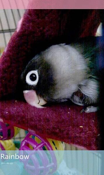 準備睡覺囉!安靜躺著真舒服耶!