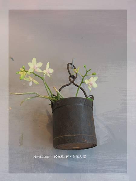 植物-02.jpg
