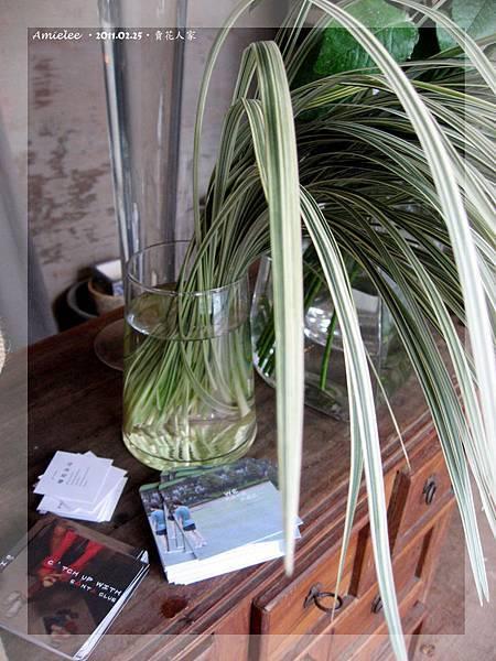植物-03.jpg