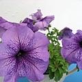 好美的紫色花