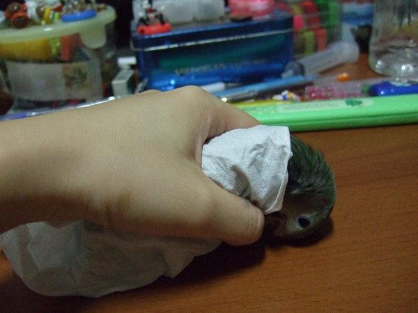 馬麻怕我會冷用衛生紙把我包起來