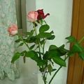 珳茜送的花