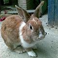 我心愛的兔兔