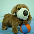 玩皮球的狗狗