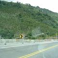 中央山脈檳榔樹