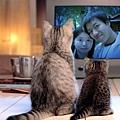 大貓帶小貓看電視