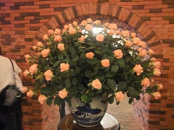 是真的玫瑰花!