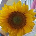 花蕊不是黑色的向日葵