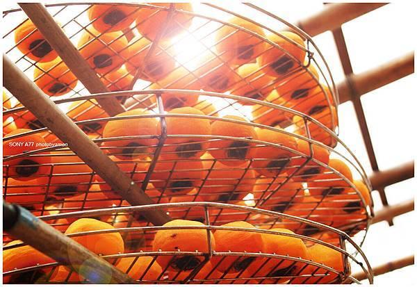新埔柿餅 11