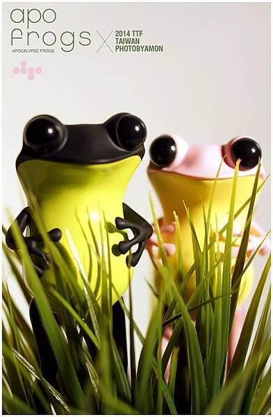 apo frogs 4
