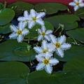 蓮花16.jpg