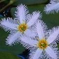 蓮花11.jpg