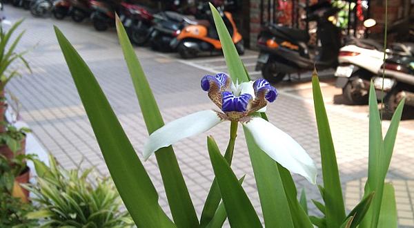 它是蘭花,而非雜草-2.png