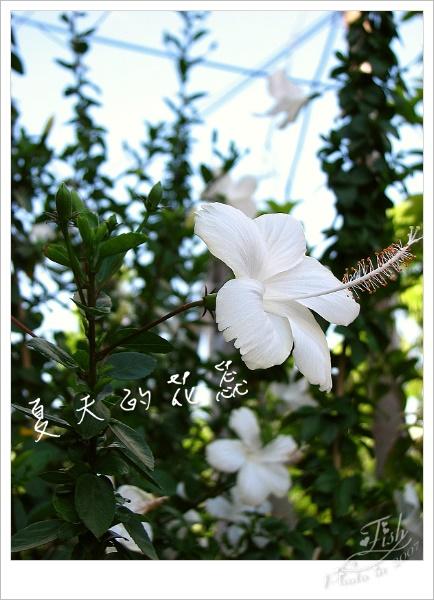 照片_0883-1.jpg