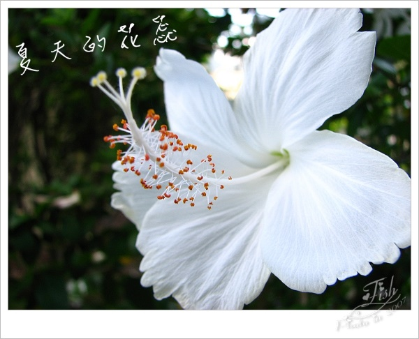 照片_0885-1.jpg