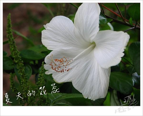 照片_0886-1.jpg