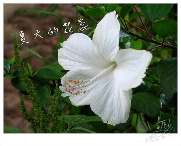 照片_0888-1.jpg